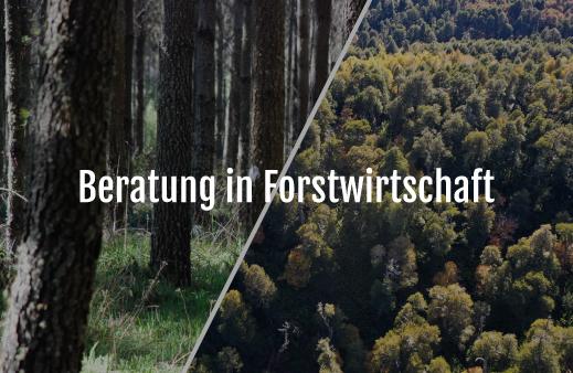 Servicio Asesoría-Forestal-alemán