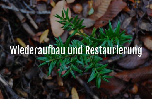 Servicio Reconstrucción-y-Restauración-de-Bosques-alemán