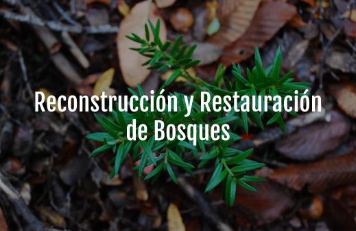 Servicio-Reconstrucción-y-Restauración-de-Bosques-v6