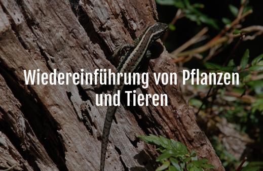 Servicio Reintroducción-de-Especies-Nativas-alemán