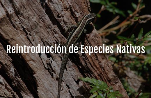 Servicio-Reintroducción-de-Especies-Nativas-v6